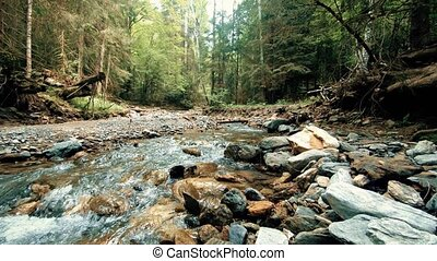 raging mountain river on forest free camera