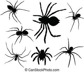 ragni