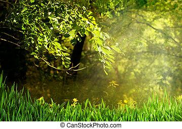 ragyog, nyár, természetes, háttér, erdő, nap