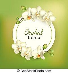 rahmen, grün, runder , hintergrund, orchidee