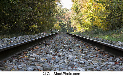 railroad track in autumn forest