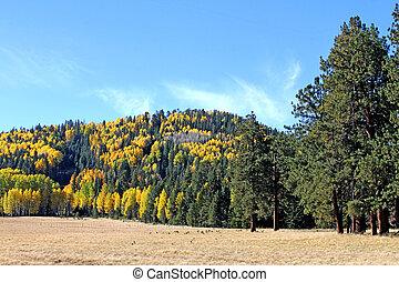 Railroad Trail,  White Mts. 1