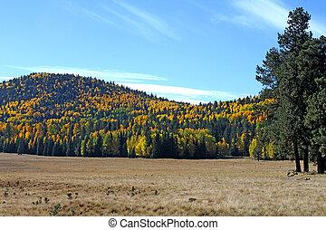 Railroad Trail,  White Mts. 2