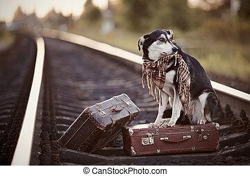 rails, bastaard, suitcases.