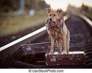 rails, dog, suitcases., rood