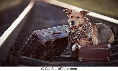 rails, dog, suitcases.