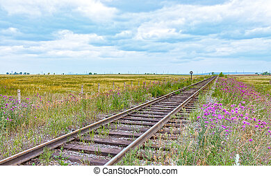 Railway in the blooming steppe