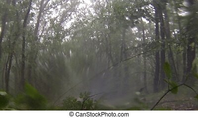 Rain and hail in the deciduous forest. Full HD