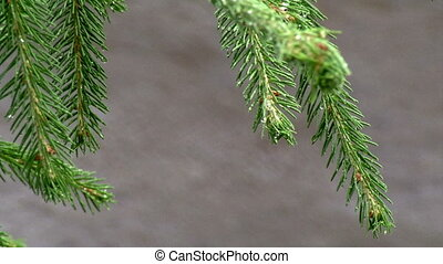 rain and pine branch with change focus on the road hd