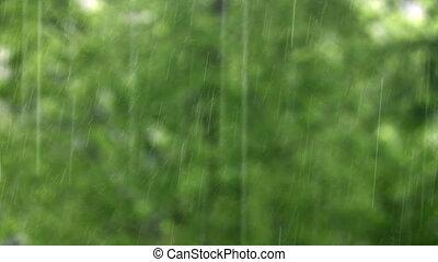 rain and tree 2