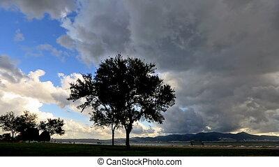 Rain clouds and tree