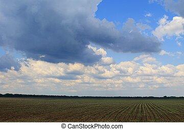 Rain clouds over field