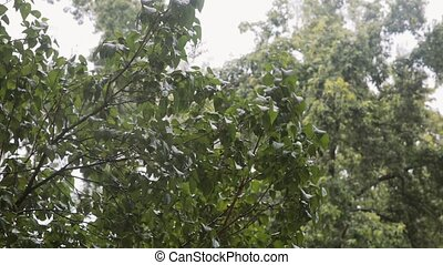 Rain drops fall on bushy green trees with sound. - Rain...