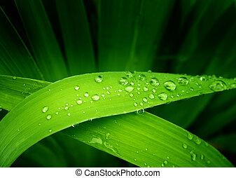 Rain drops on a green leafs