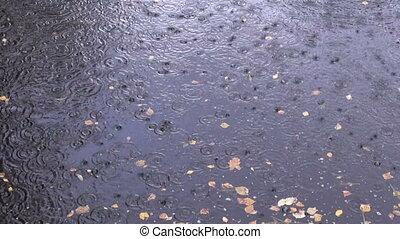 rain drops on autumn lake water