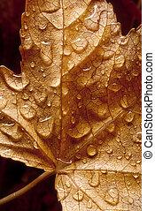 drops on dried leaf