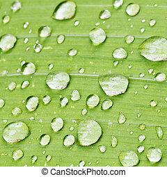 rain drops on green blade of iris close up