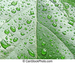 rain drops - rain drops on a leaf...