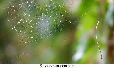 Rain drops shining on a spider web closeup