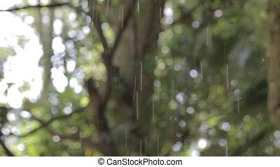 Rain drops. Spring.
