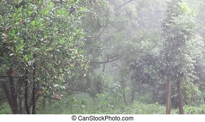 Rain falling in the jungle