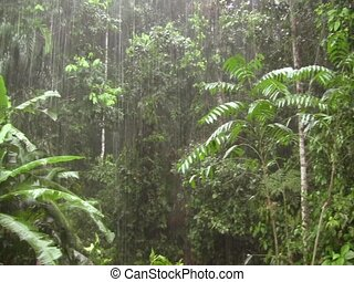 Rain falling in the rainforest