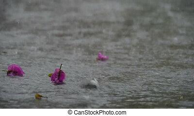 Rain falling in tropics