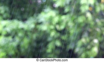 Rain falling on foliage