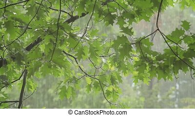 Rain falling over green leaves
