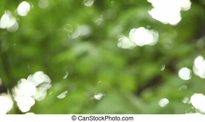 Rain falling over green leaves