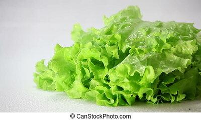 Rain falls on lettuce.