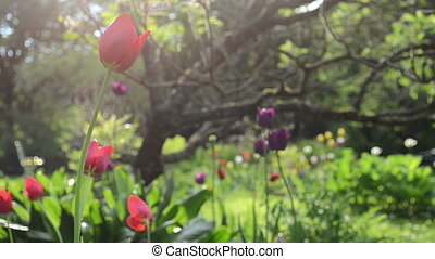 rain flowers tree garden