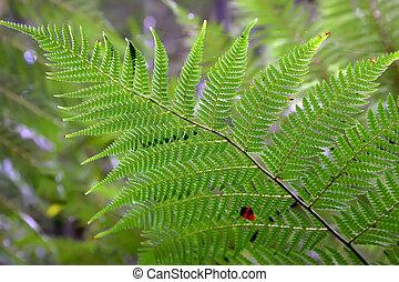 Rain forest, Australia - Fern in rain forest, Australia