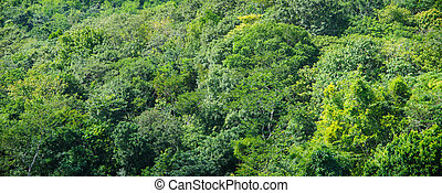 Rain Forest Background
