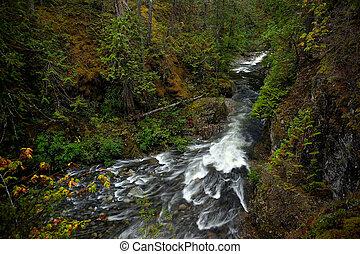 Rain forest creek in Pacific Rim National Park on Vancouver Island near Tofino.