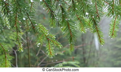 Rain forest drops branch - Forest scene with sparkling drops...