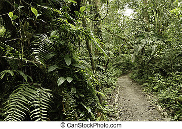 Rain forest green tropical amazon jungle