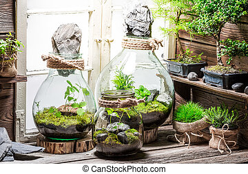 Rain forest in a jar as save the earth idea