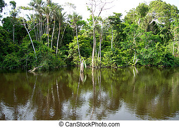 Rain forest in Amazon