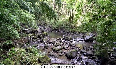 Rain Forest in Hawaii - Rain Forest Scene in Maui Hawaii