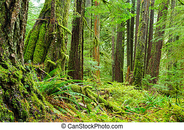 Rain Forest in Oregon - Sol Duc rainforest at Olympic...