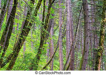 Rain Forest in Oregon