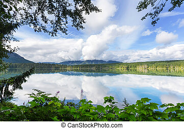 Vancouver island - Rain forest in Vancouver island, British...