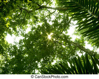 low angle shot of rain forest or tropical jungle