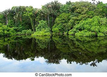 Rain Forest mirrored in a lagoon