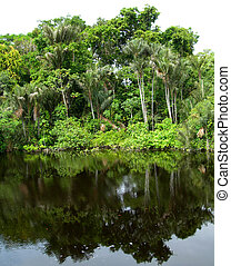 Rain Forest mirrored in a lagoon with lillies, on Rio Negro in the Amazon River basin, Brazil, South America
