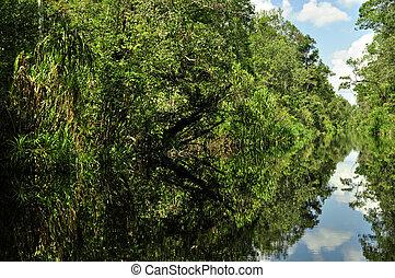 Rain forest mirrored in water - Lush green rainforest along...