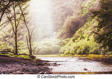 Rain forest on Big Island in Hawaii.