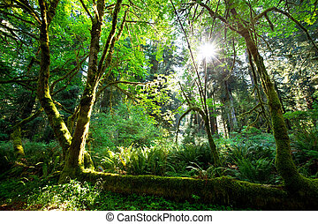 Rain forest - rain forest
