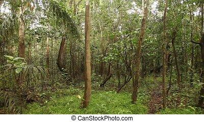 Rain Forest, South America, Peru